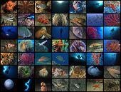 image of undersea  - Composition of 49 undersea pics all from Mediterranean Sea - JPG