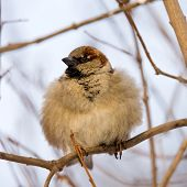 Furry Sparrow poster