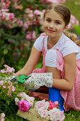 Rose garden - beautiful girl cutting roses in the garden