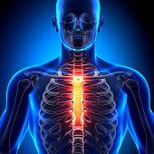 Esterno - anatomia ossos