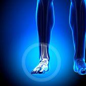 Artrodeses / falanges - tornozelo - anatomia de ossos