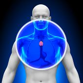 Medical X-Ray Scan - Thymus