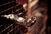 Ape Hand