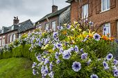 Flowers And Houses In Lyons La Foret