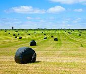 Linha de plástico envolto de fardos de feno num campo com fazenda no fundo