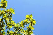 Fresh Green Leaf And Blue Sky