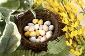 Birds Nest Of Sugar Coated Realistic Chocolate Eggs
