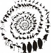 Birds Waterfowl In Spiral.eps