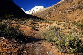 Vegetación de altura en el valle de Cohup, Cordiliera Blanca, Perú, Sudamérica