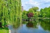 Boston Public Garden on a sunny day