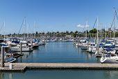 Sailboats Moored At Squalicum Bay