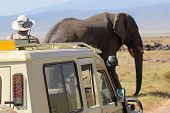 African Elephant Near A Vehicle