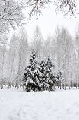 White Winter Landscape With Trees