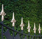 Black Painted Wrought Iron Fence With Golden Spikes