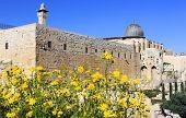 Blooming Jerusalem, Israel