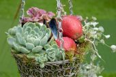 Autumnal Decorational Hanging Basket