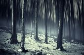 Dark scary strange forest with fog and snow forest