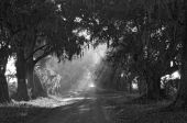 Shady Oak Lane Bw