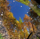 The Romantic Autumn Landscape.