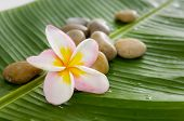 Set of frangipani and pile of stones on banana leaf