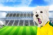 Brazilian west highland white terrier screaming goal at stadium
