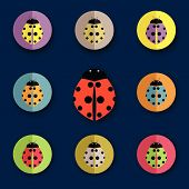 Vector Group Of Beetles
