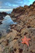 Seastar Ocean Landscape