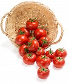 Red Tomatoes  Fall Of The Basket