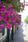 picture of public housing  - British public house flower decoration - JPG