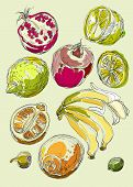 Set of fruits. Freehand drawing. Sweet tropical fruit.