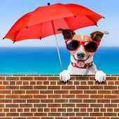 pic of stonewalled  - summer vacation dog behind stonewall with red umbrella - JPG