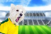 stock photo of west highland white terrier  - Brazilian west highland white terrier screaming at stadium - JPG