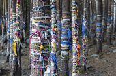 Zalaal - tapes, tied to the trees. Sacred Grove of tears in Arshan resort. Buryatia