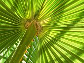 Leaf Of Palm Tree