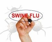 foto of swine flu  - writing word SWINE FLU with marker onwhite background made in 2d software - JPG