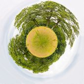 Meadow with trees like little planet