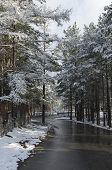Wet asphaltic road among snowy trees