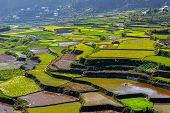 stock photo of luzon  - overview of the rice-terraces of Sagada Luzon Philippines