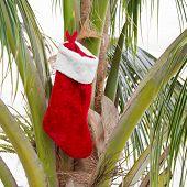 Christmas Sock On Coconut Palm Tree