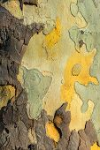 Closeup photo of a tree trunk