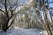 Path Through A Frozen Forest With Frost And Snow In Winter