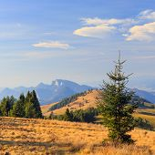 Mountain Landscape And Trees