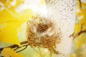Empty nest in autumn. Shallow depth of field. Shallow focus.