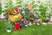 Wheelbarrow with shovel and rake in a beautiful garden