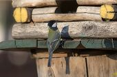 Tit On A Wooden House