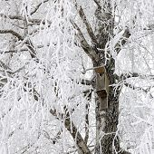 Birdhouse On Snowy Tree