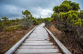 Long Boardwalk Through Marsh