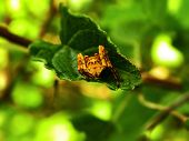 Tangle-web Spider