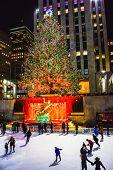 This Years Tree 2014