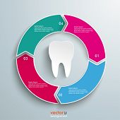 Colored Ring Cycle 4 Options Tooth